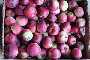 Купить экологически чистые яблоки оптом и в розницу